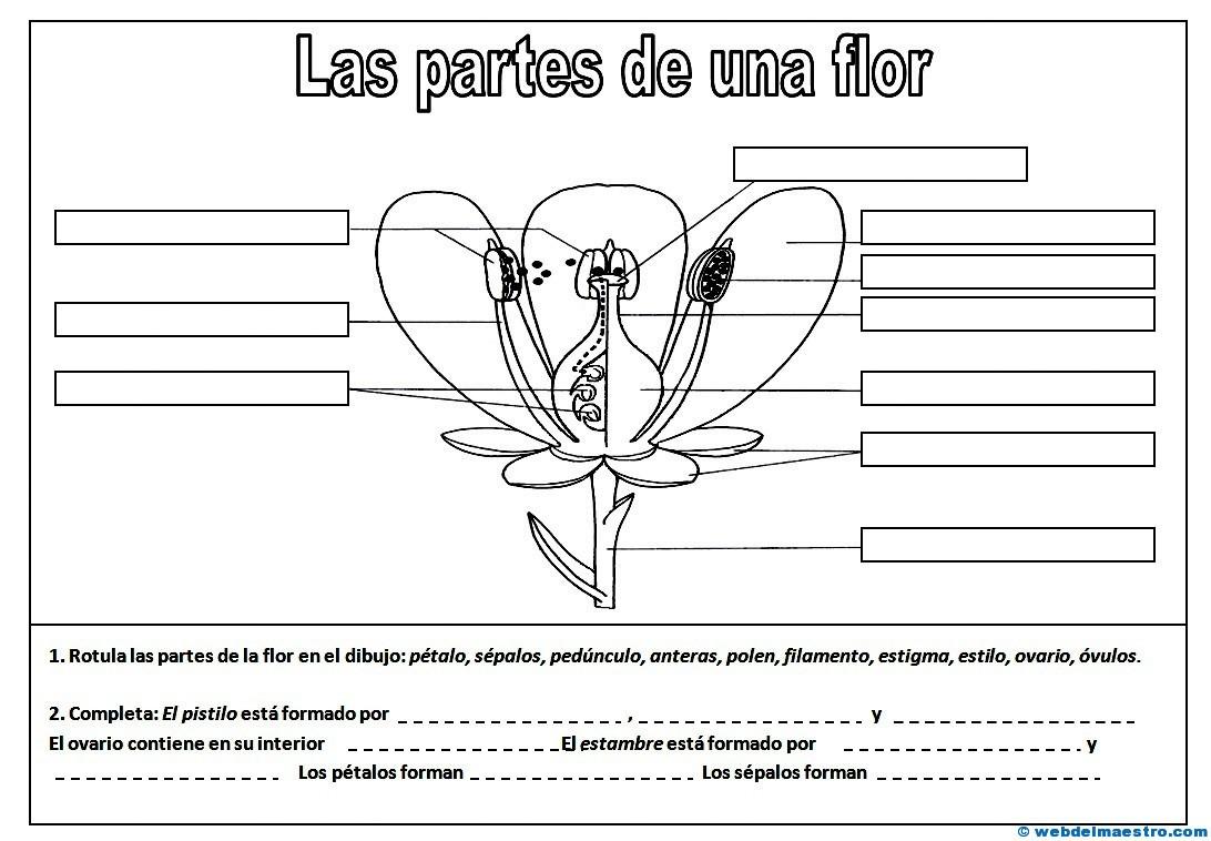 Partes de una flor - Web del maestro