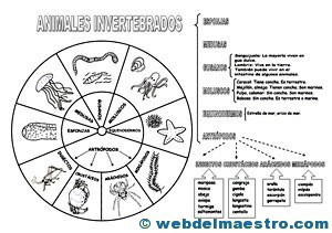 Animales invertebrados - Web del maestro