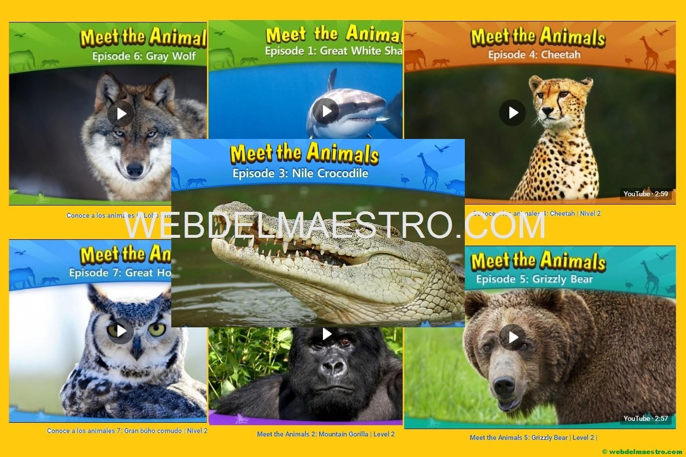 Animales Salvajes En Inglés Web Del Maestro