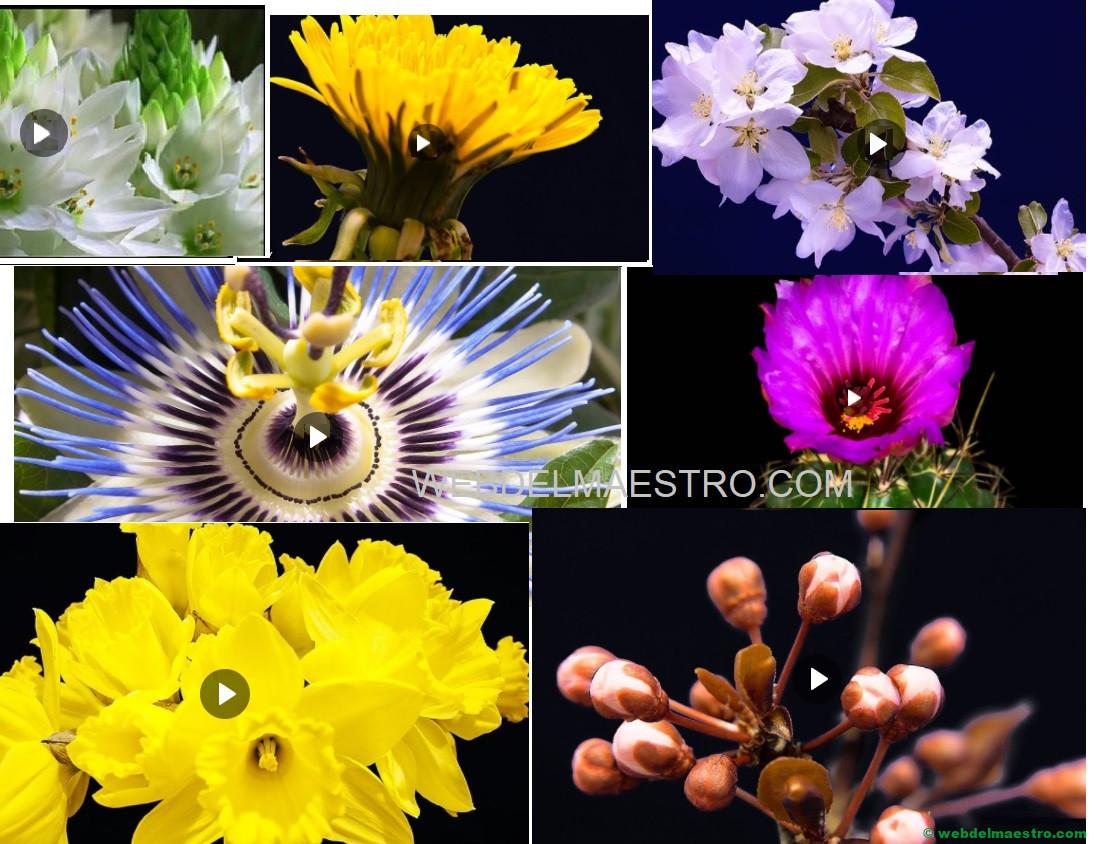Flores de primavera - cómo florecen y crecen